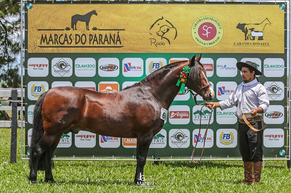 Grande Campeão e Melhor Exemplar - KING DO RIBEIRÃO BONITO