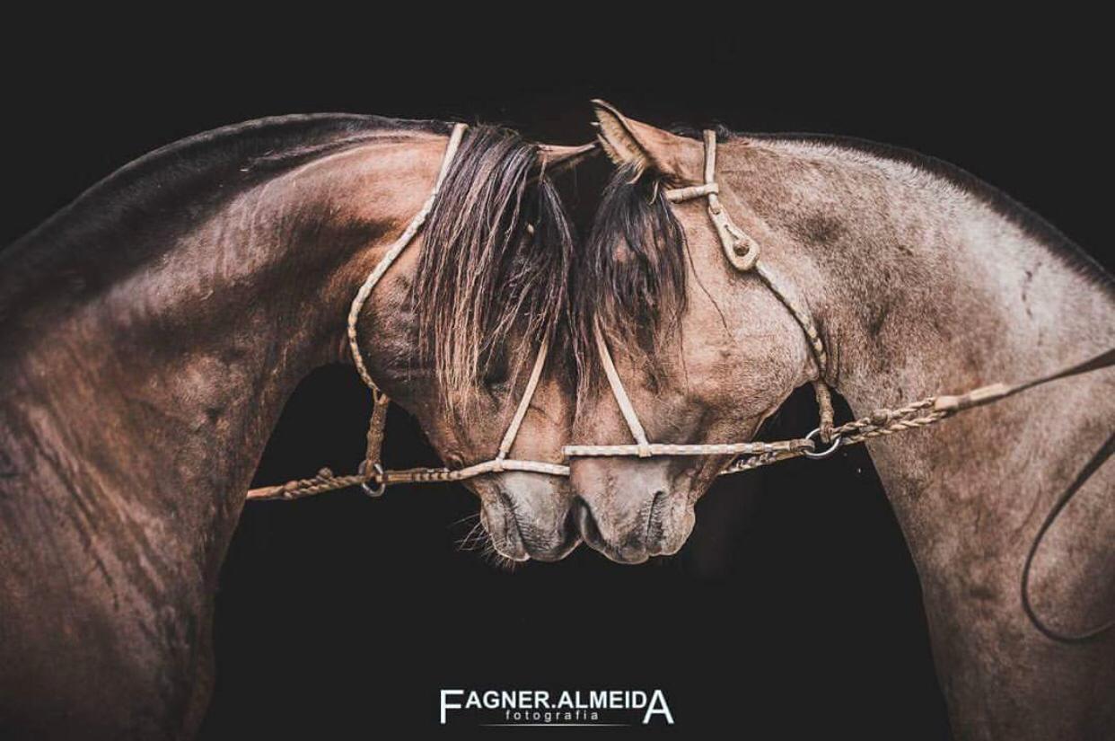 Em Paris, fotografia do Cavalo Crioulo divide espaço com artes históricas no Museu do Louvre