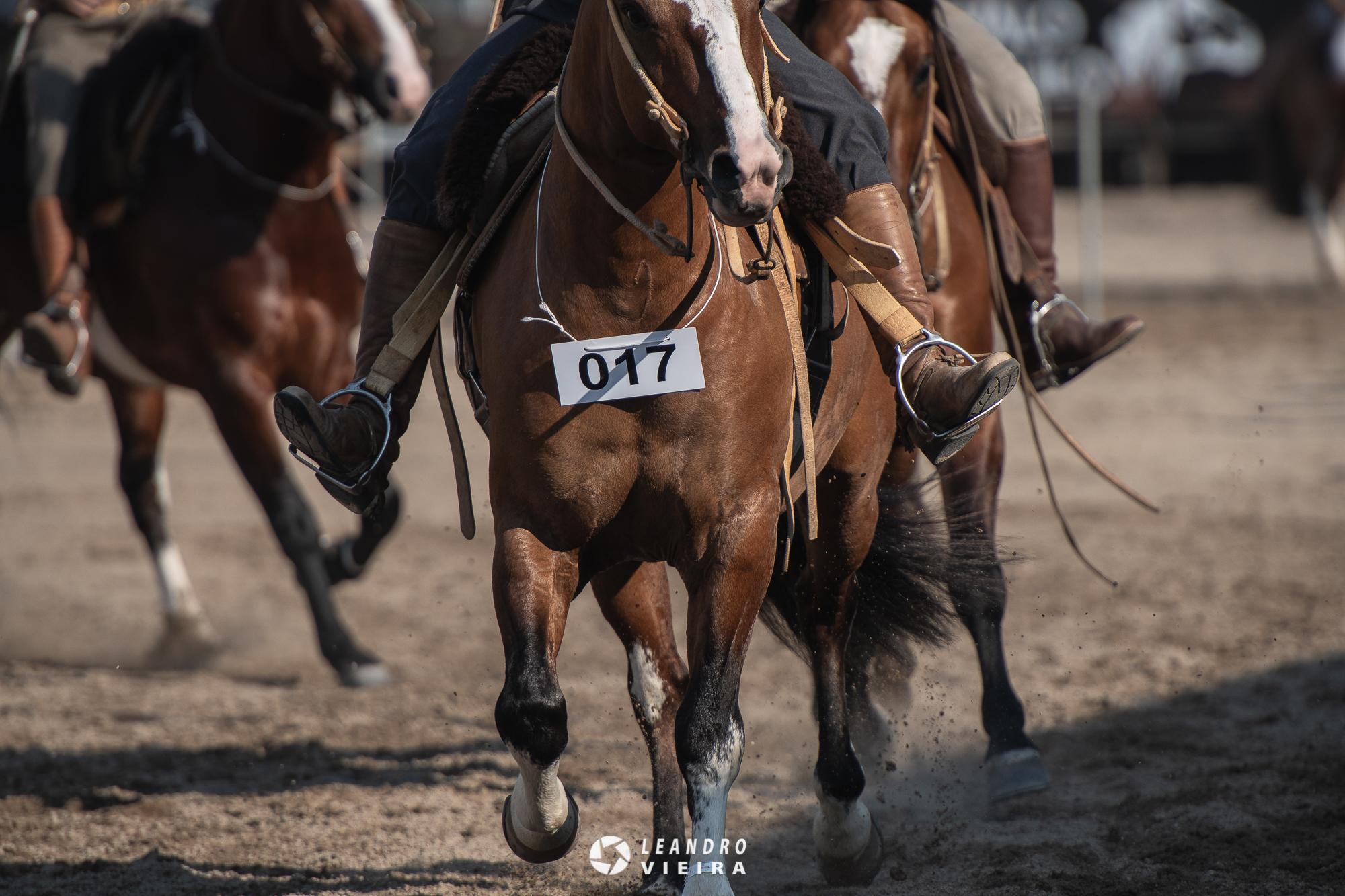 Prévia RS 01: confira os 82 animais pré-selecionados até o momento