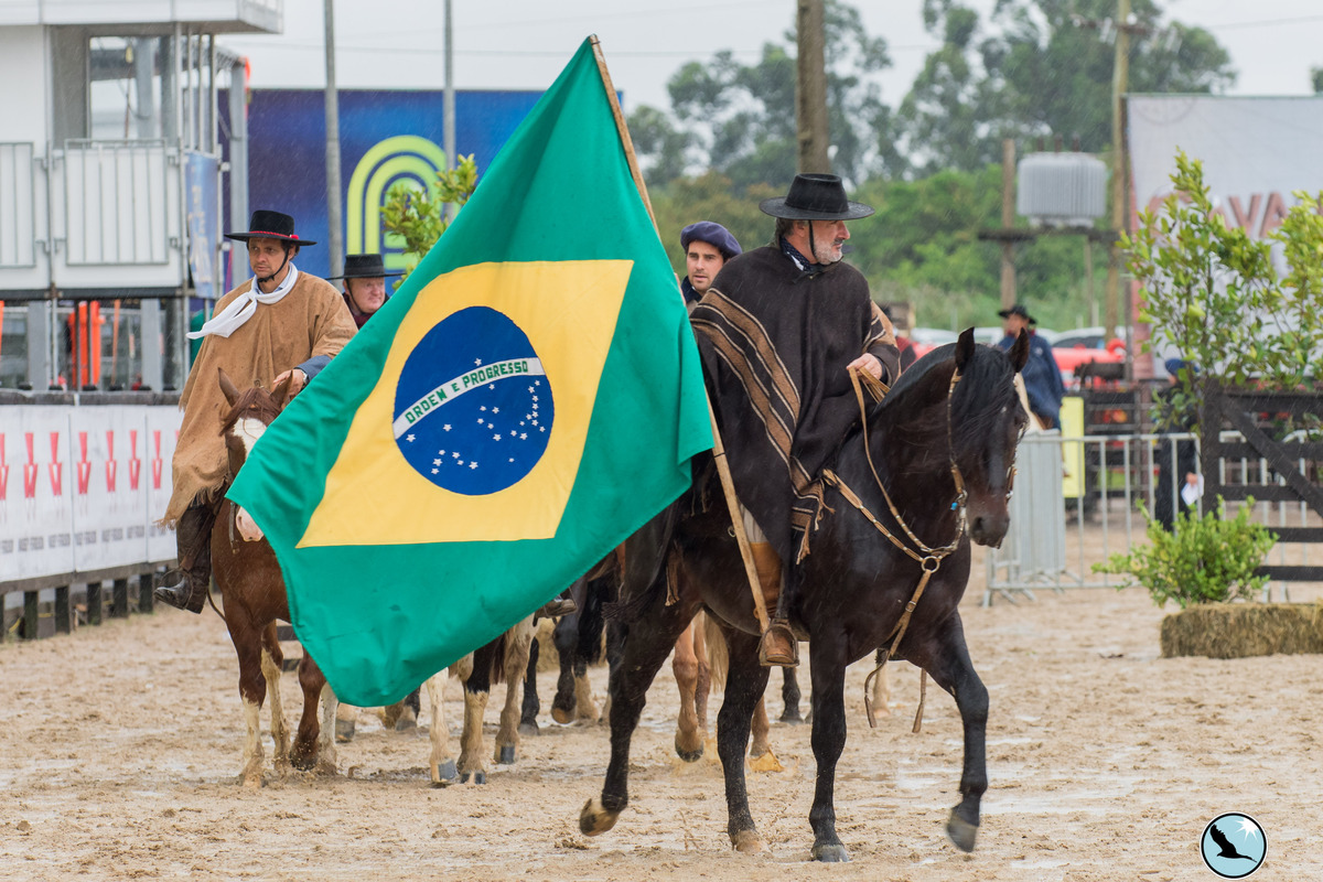 Expo FICCC 2021: confira o sistema de classificação que forma a delegação brasileira