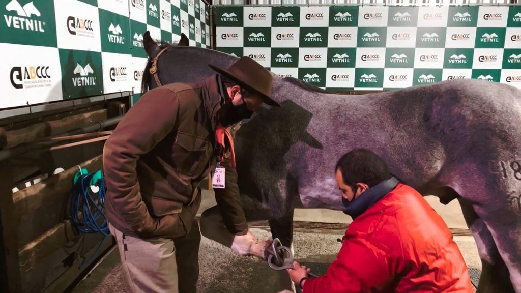ABCCC divulga informativo sobre equipe veterinária e de bem-estar animal para o Freio de Ouro 2021